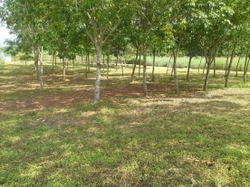 Lawn and main land area