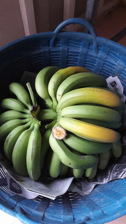 BananaRipeninginBasket