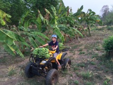 Need ATV for Bananas
