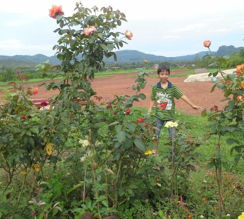 Dan in Roses