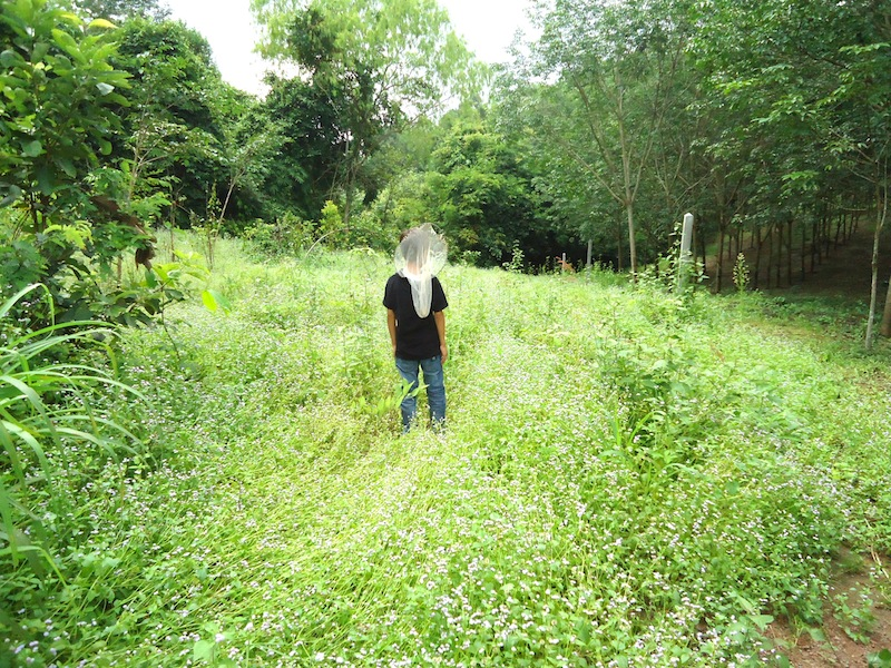 Walking on the property in Loei Thailand