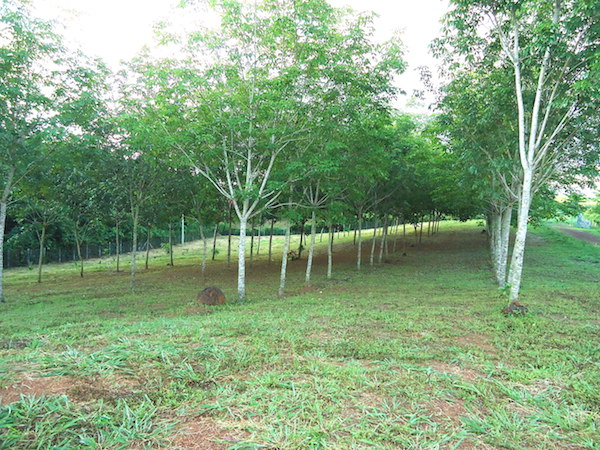 property for sale in Loei Thailand